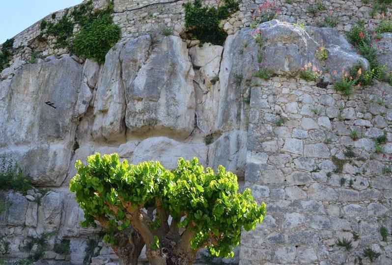 Jardin des Herbes – Jardin communal classé «Remarquable» à La Garde-Adhémar - 0