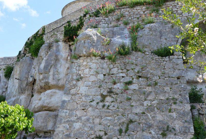 Jardin des Herbes – Jardin communal classé «Remarquable» à La Garde-Adhémar - 5