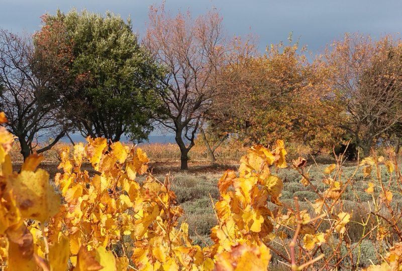 Provence Rêverie à Valréas - 2