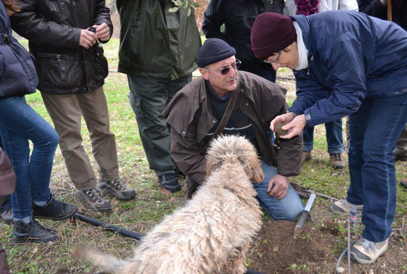Week-end truffe : à la découverte de la truffe noire à La Garde-Adhémar - 3