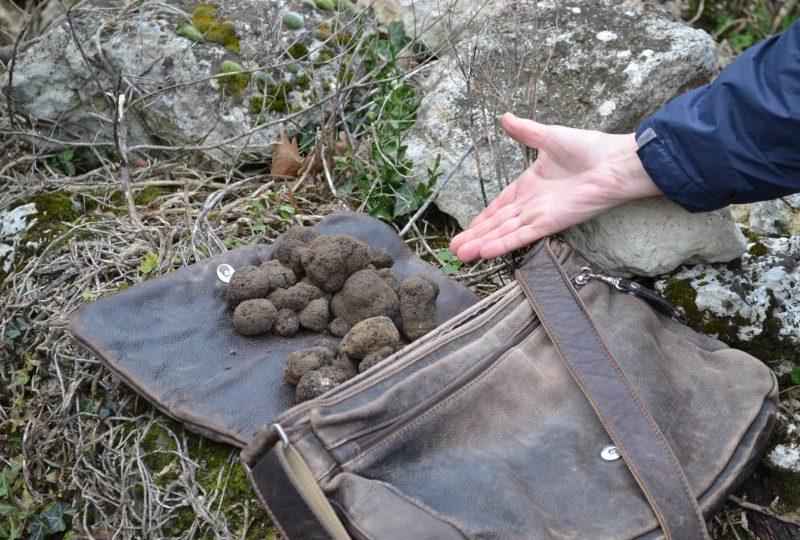 Week-end truffe : à la découverte de la truffe noire à La Garde-Adhémar - 1
