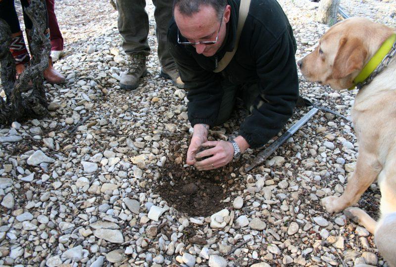 Week-end truffe : à la découverte de la truffe noire à La Garde-Adhémar - 5