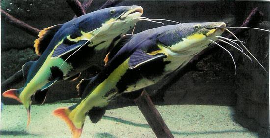 Aquarium des Tropiques à Allex - 1