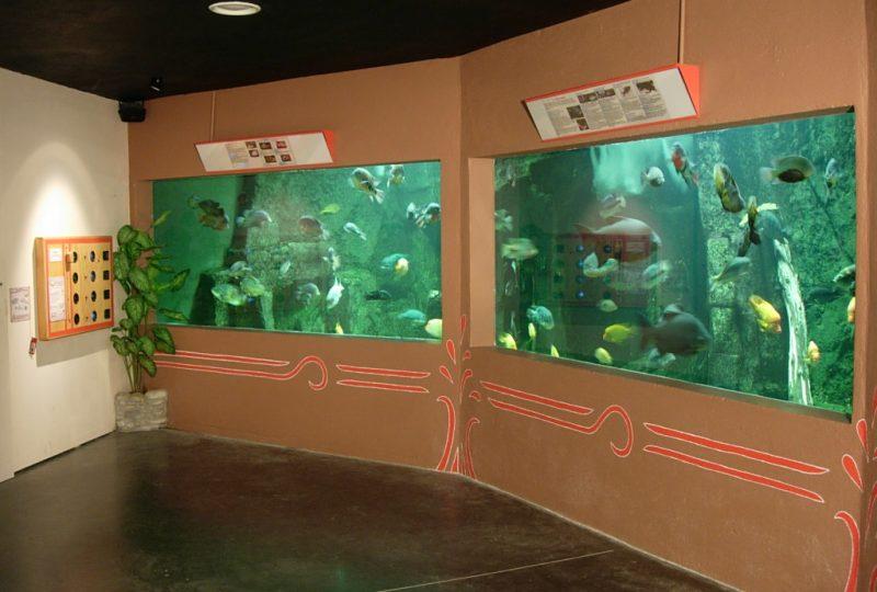 Aquarium des Tropiques à Allex - 4